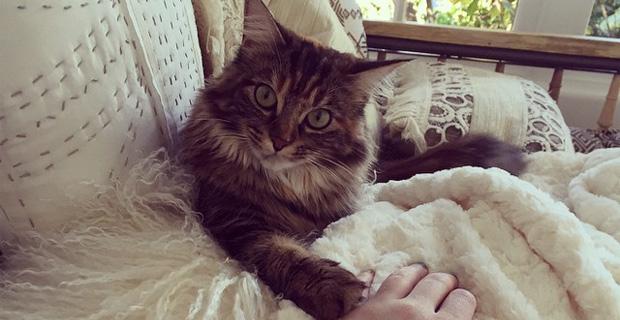 Звезды в соцсетях: выпуск с котиками