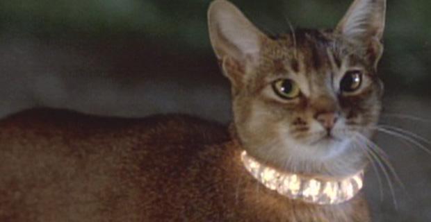 Сто лет милоты: 10 фильмов с котиками